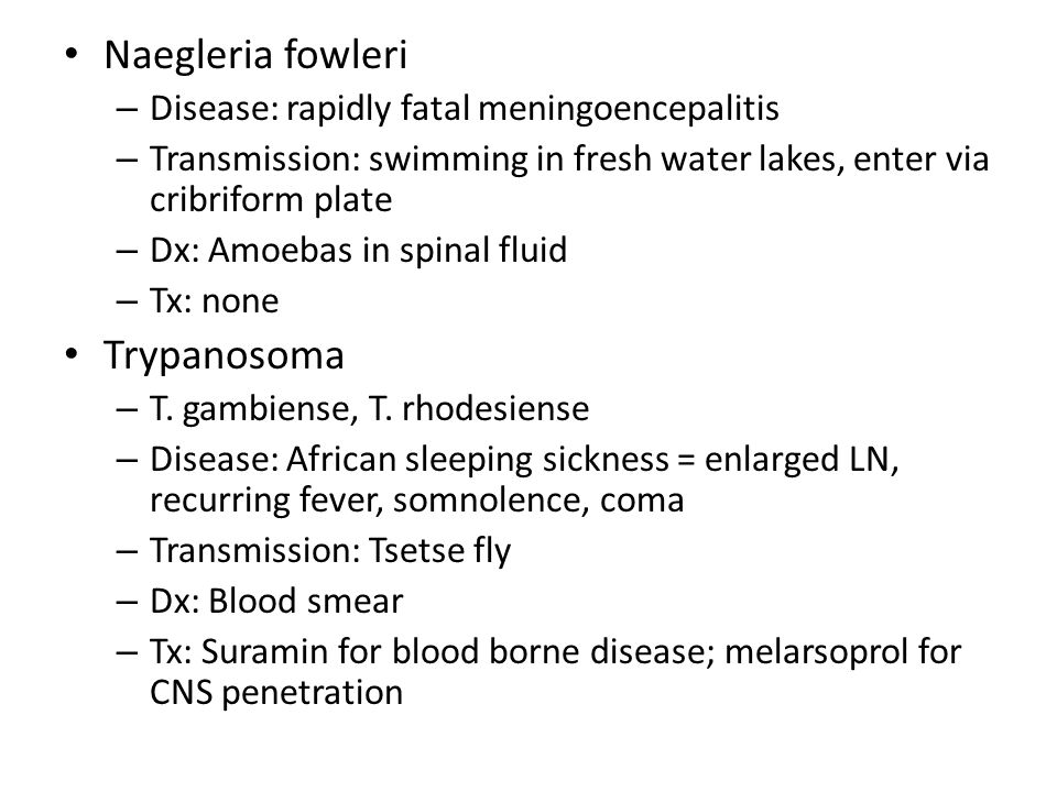 Naegleria fowleri Trypanosoma