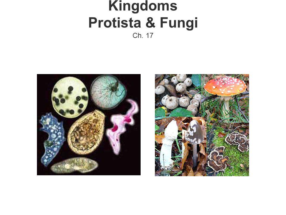 Kingdoms Protista & Fungi Ch. 17