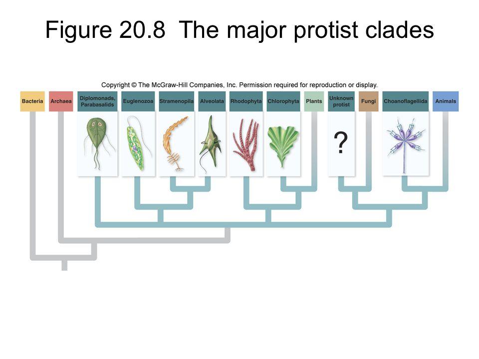 Figure 20.8 The major protist clades