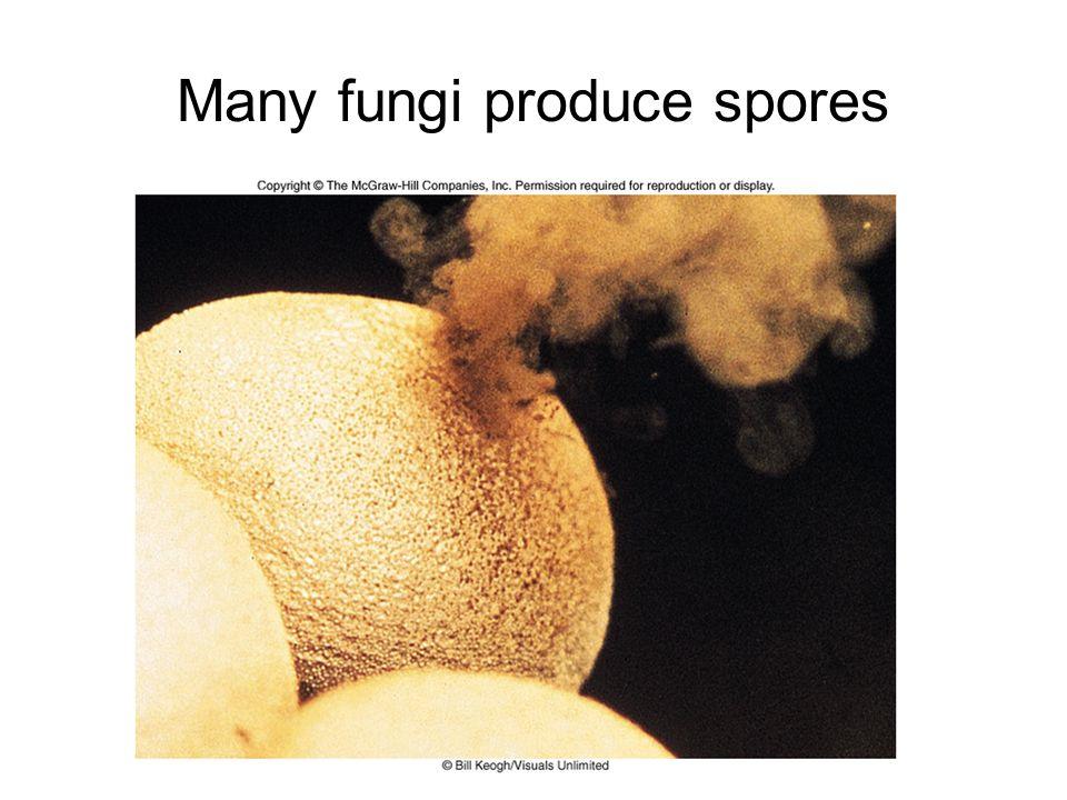 Many fungi produce spores