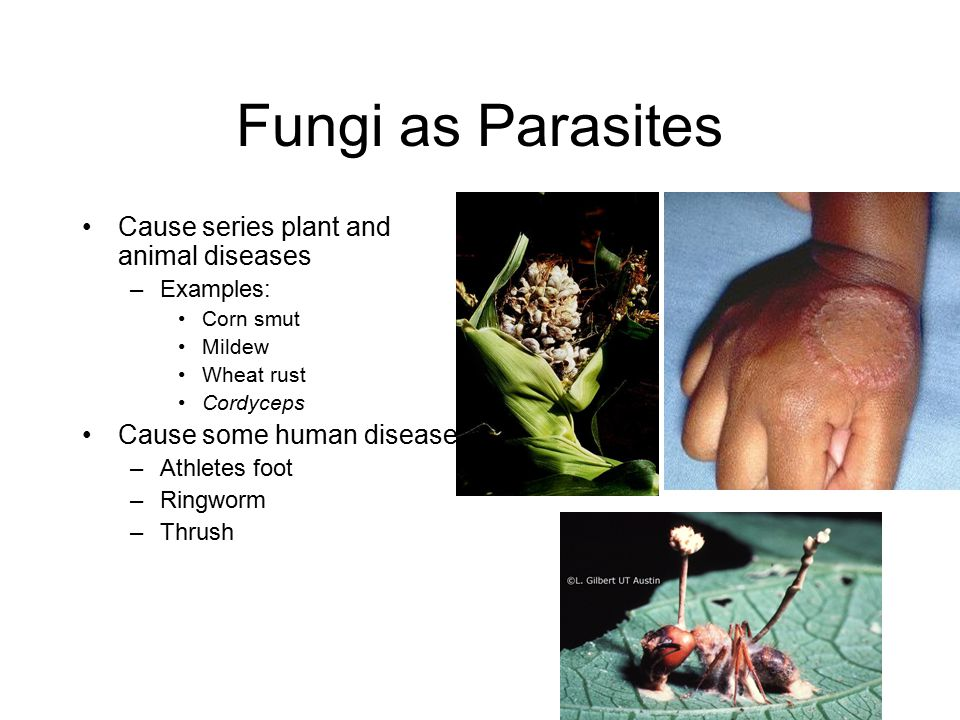 Fungi as Parasites Cause series plant and animal diseases
