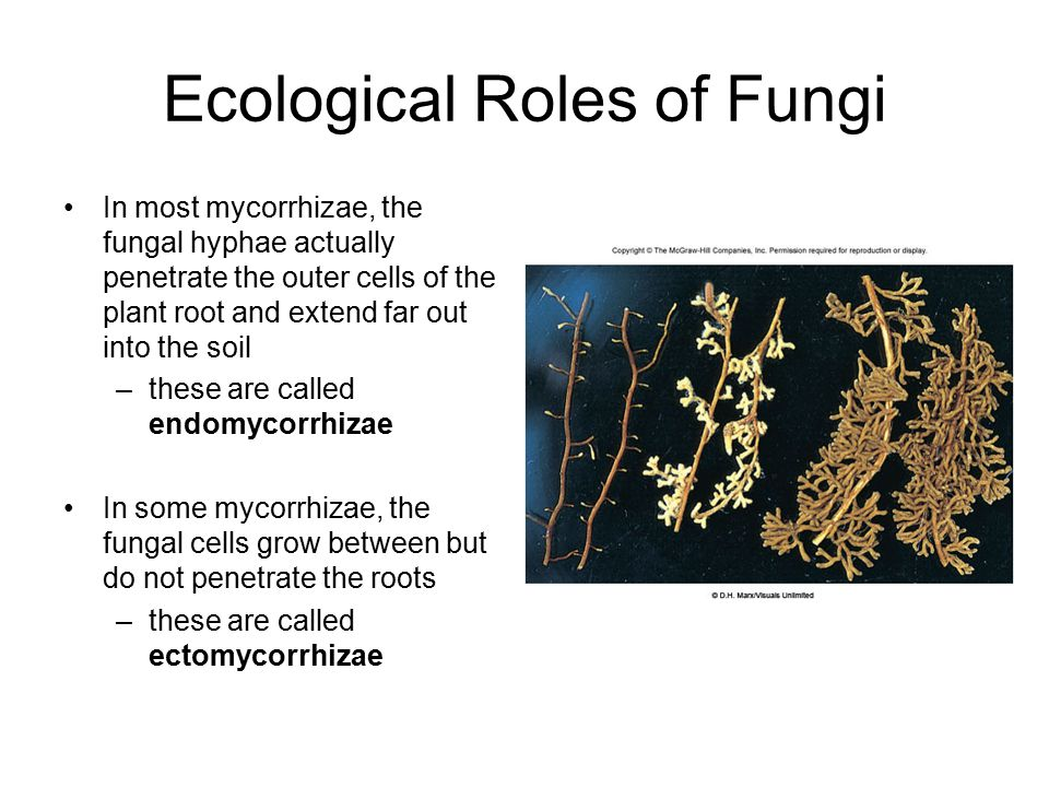 Ecological Roles of Fungi