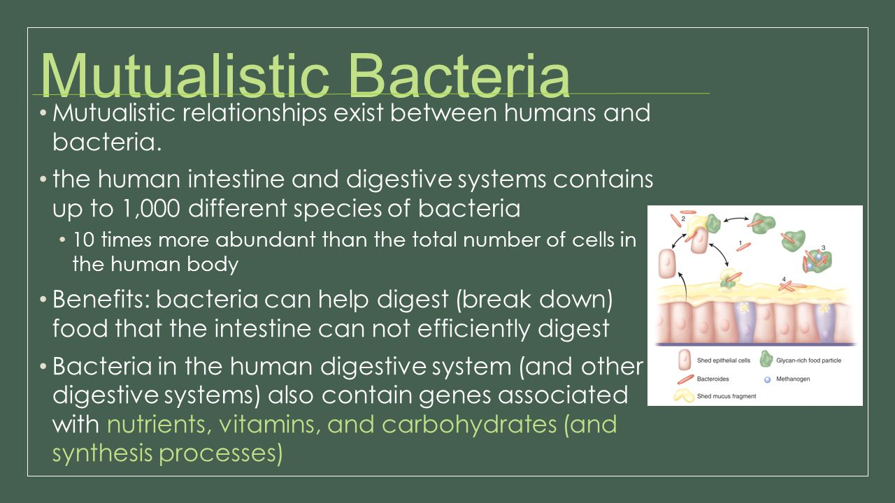 Mutualistic Bacteria Mutualistic relationships exist between humans and bacteria.