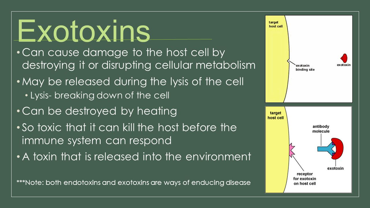 Exotoxins Can cause damage to the host cell by destroying it or disrupting cellular metabolism. May be released during the lysis of the cell.