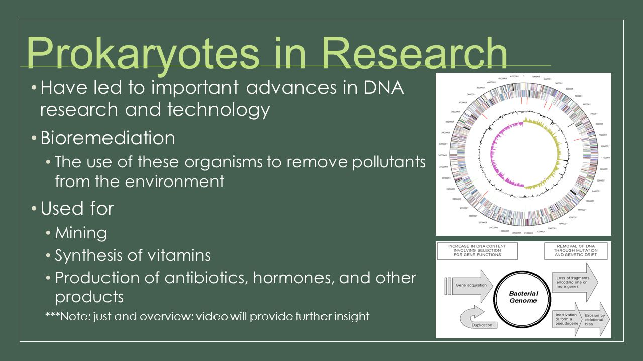Prokaryotes in Research