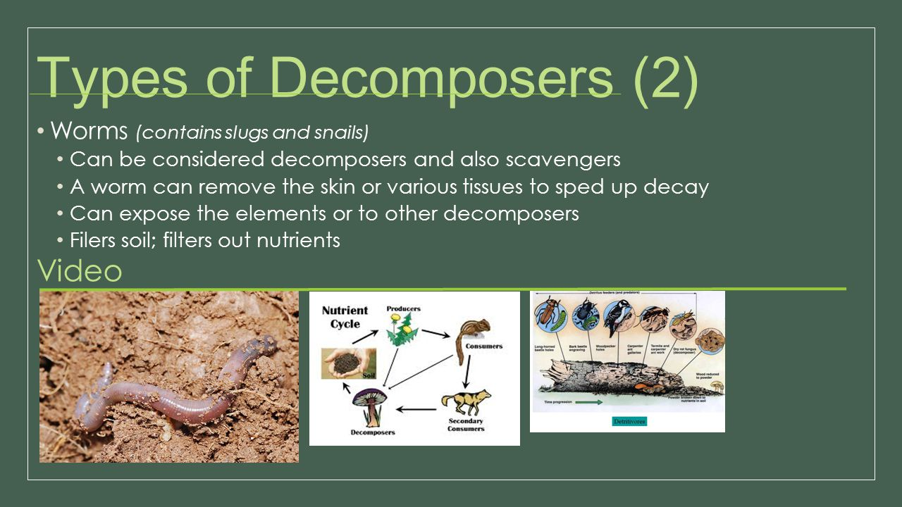 Types of Decomposers (2)