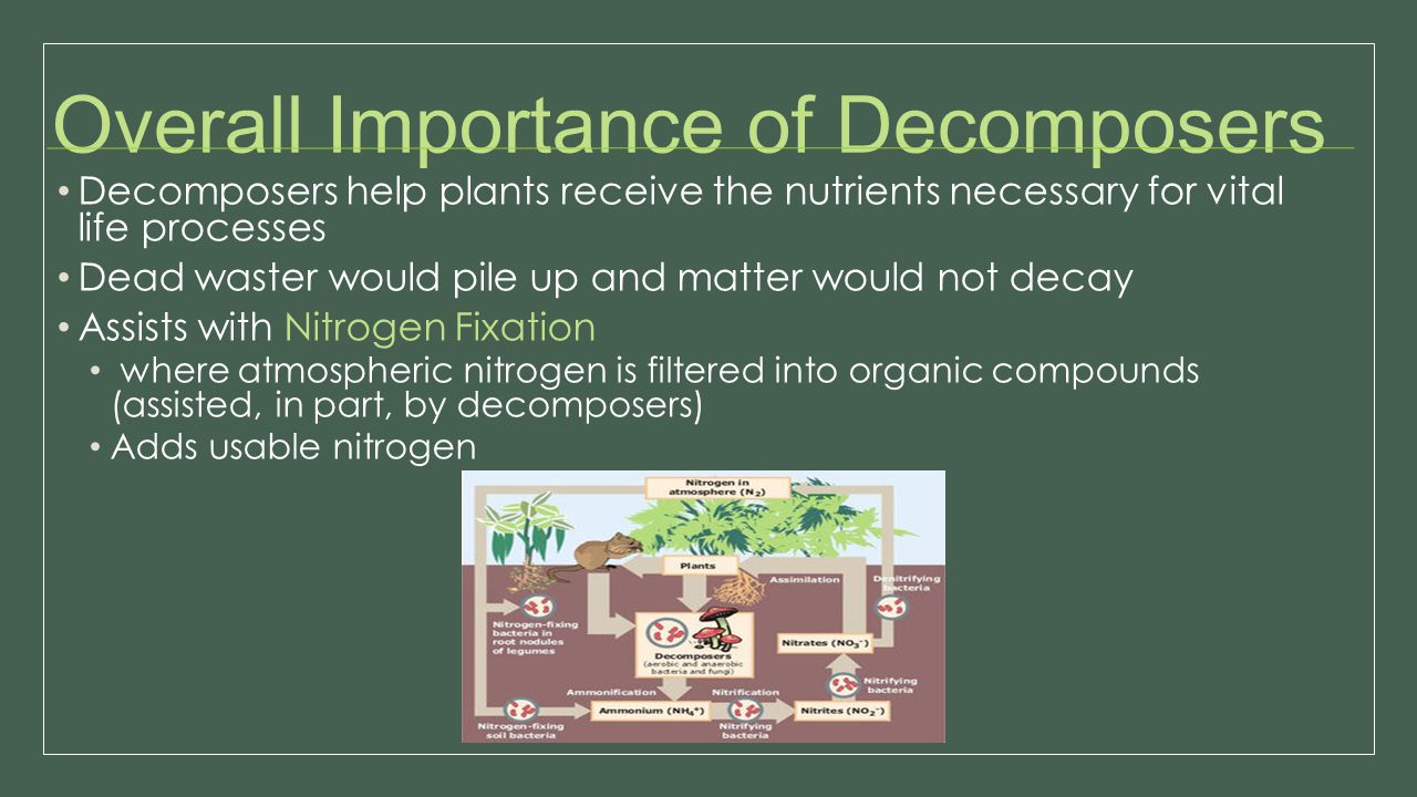 Overall Importance of Decomposers