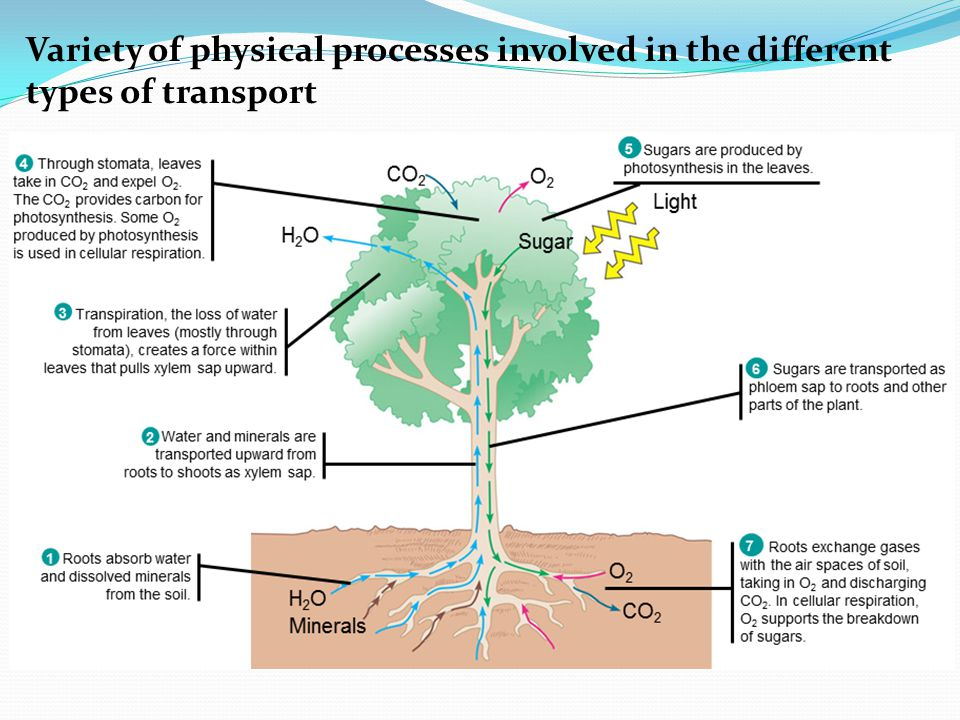Variety of physical processes involved in the different types of transport