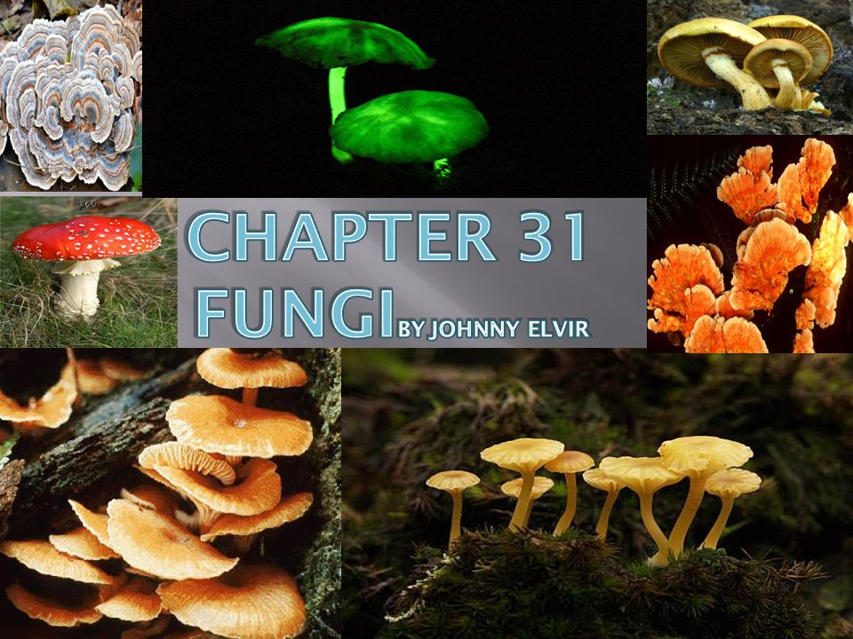 Chapter 31 fungiby johnny elvir