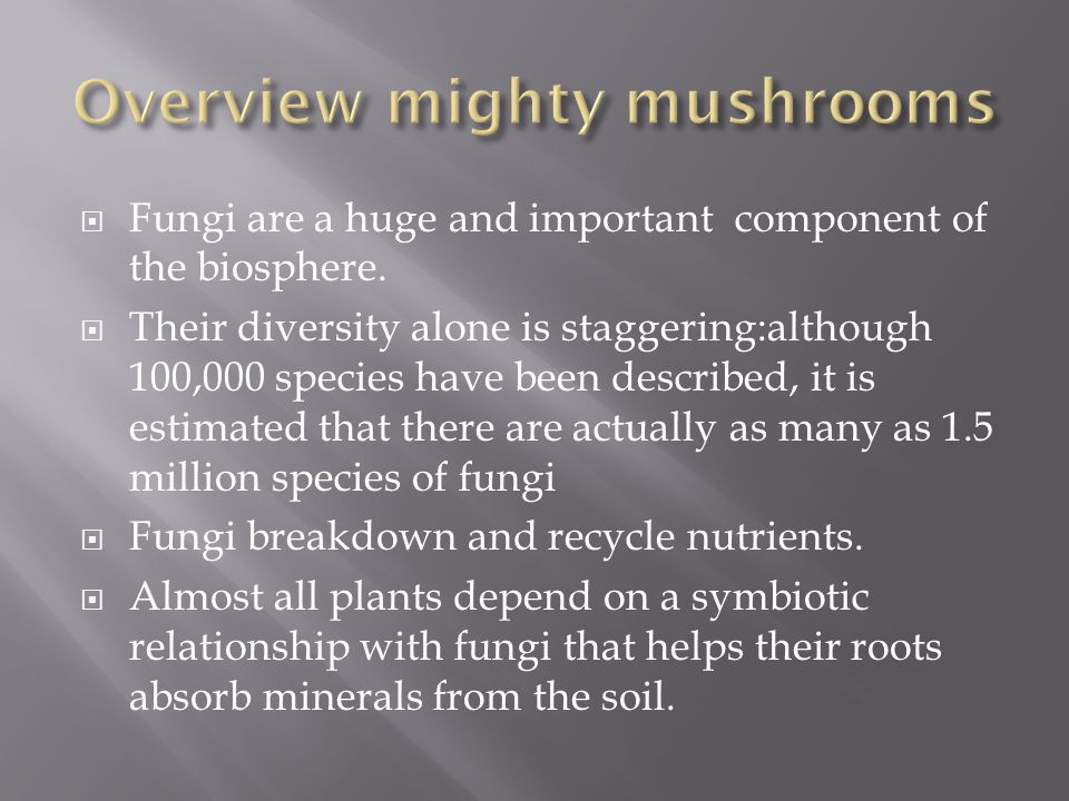 Overview mighty mushrooms