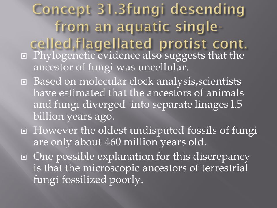 Concept 31.3fungi desending from an aquatic single-celled,flagellated protist cont.