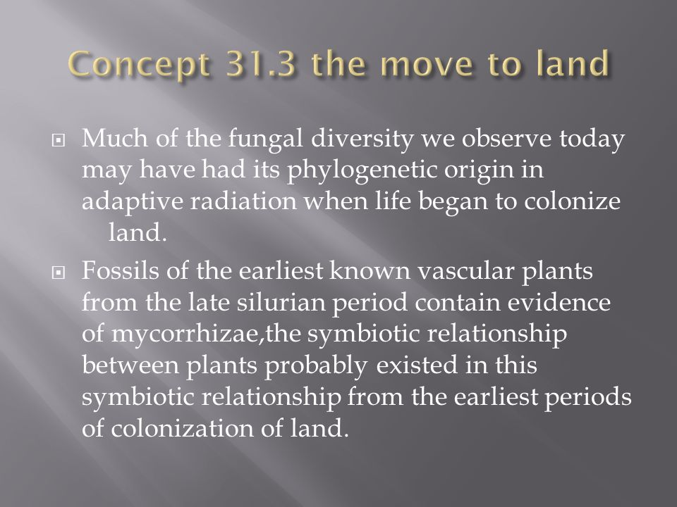 Concept 31.3 the move to land