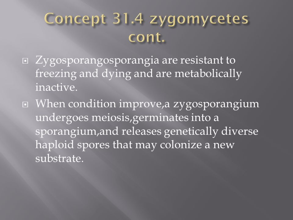 Concept 31.4 zygomycetes cont.
