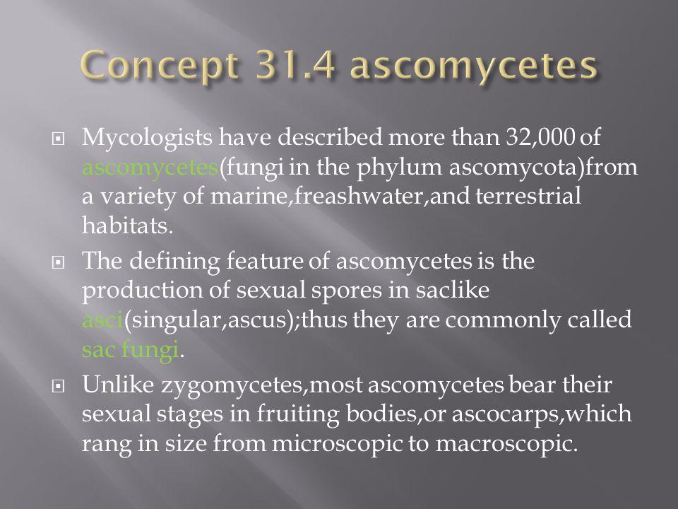 Concept 31.4 ascomycetes