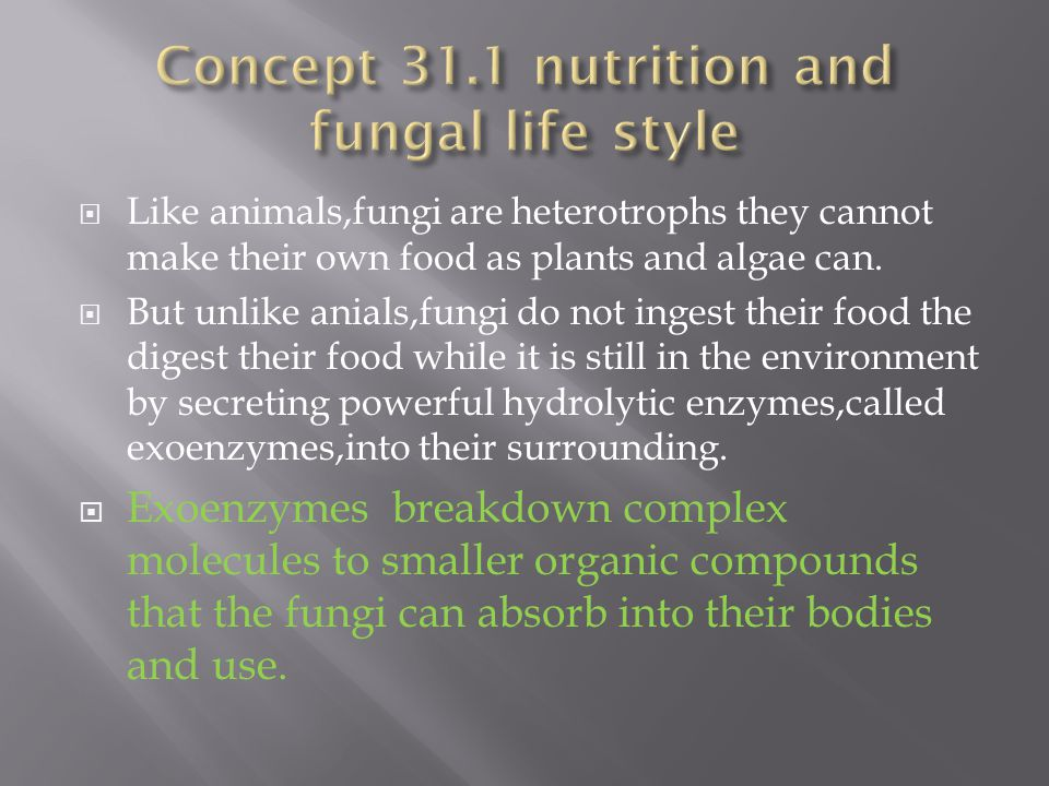 Concept 31.1 nutrition and fungal life style