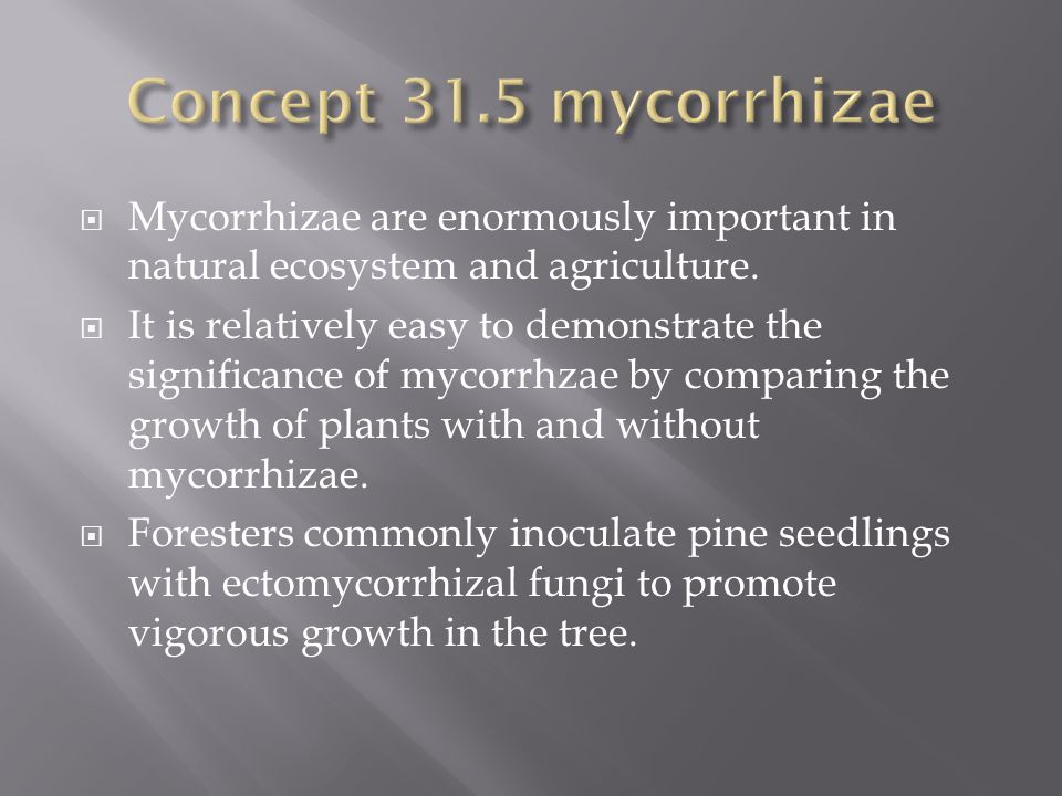 Concept 31.5 mycorrhizae Mycorrhizae are enormously important in natural ecosystem and agriculture.