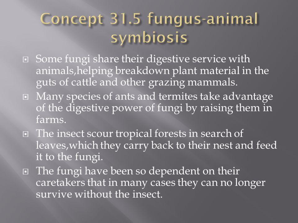 Concept 31.5 fungus-animal symbiosis