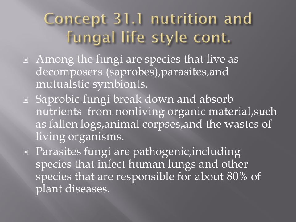 Concept 31.1 nutrition and fungal life style cont.