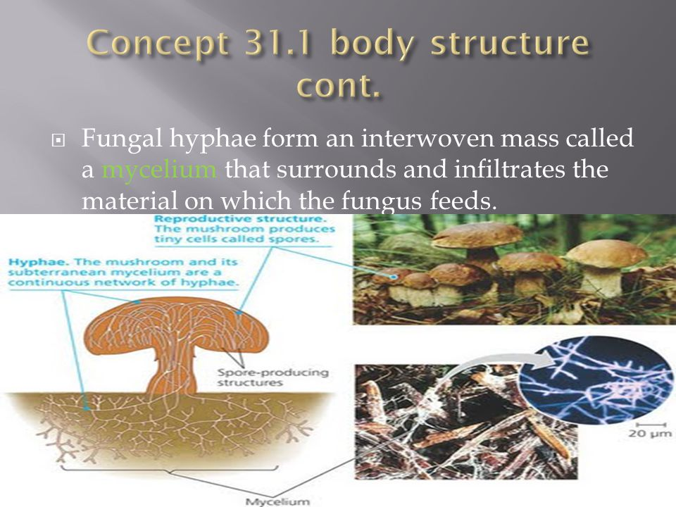 Concept 31.1 body structure cont.