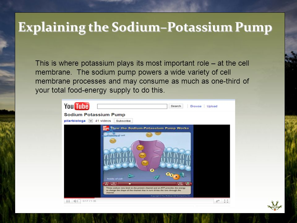 Explaining the Sodium–Potassium Pump