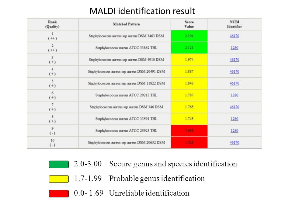 MALDI identification result