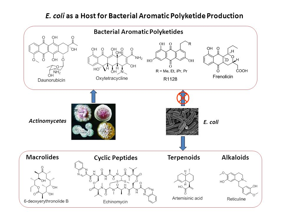 E. coli as a Host for Bacterial Aromatic Polyketide Production