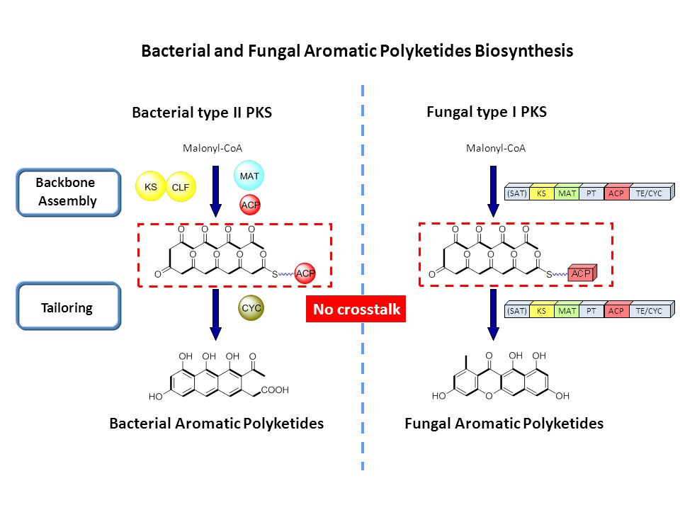 Bacterial and Fungal Aromatic Polyketides Biosynthesis