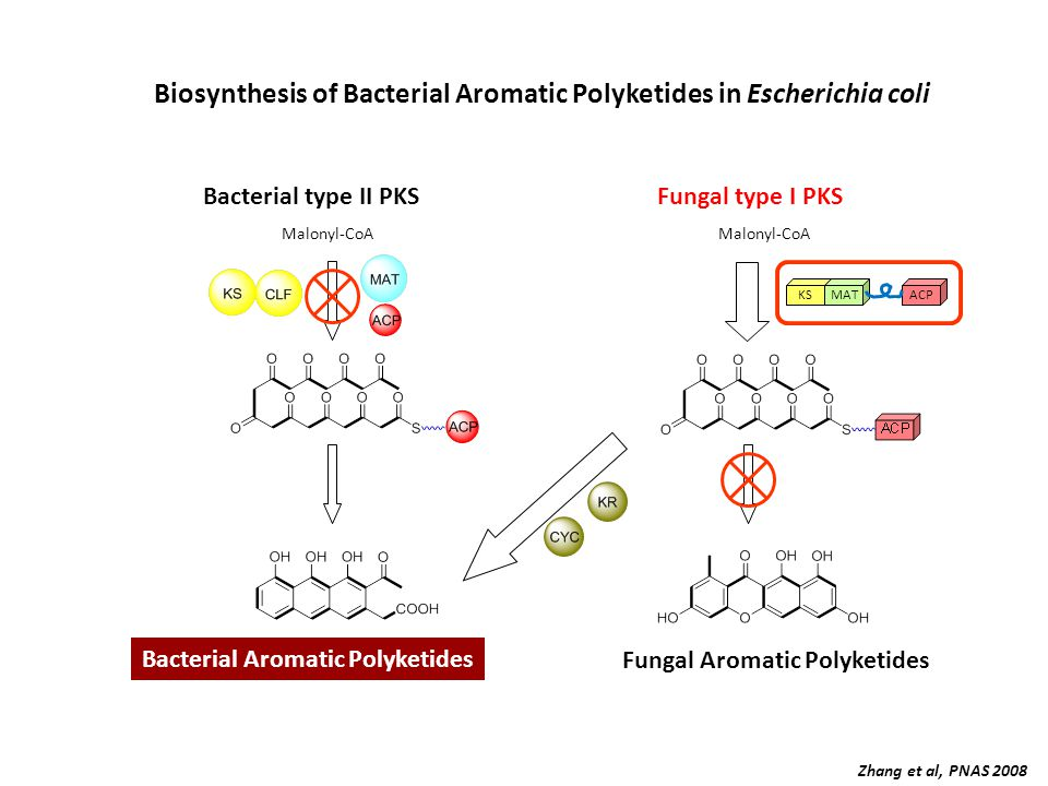 Biosynthesis of Bacterial Aromatic Polyketides in Escherichia coli