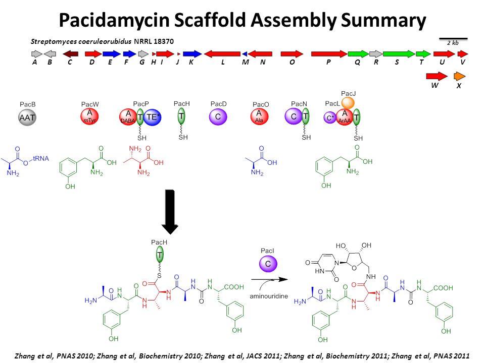Pacidamycin Scaffold Assembly Summary