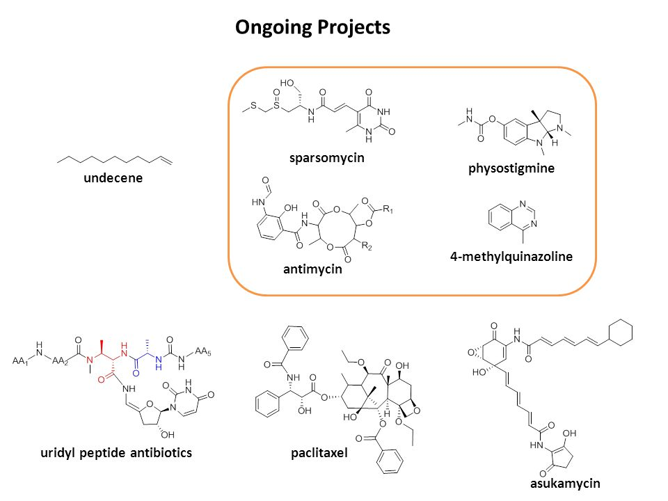 Ongoing Projects sparsomycin physostigmine undecene