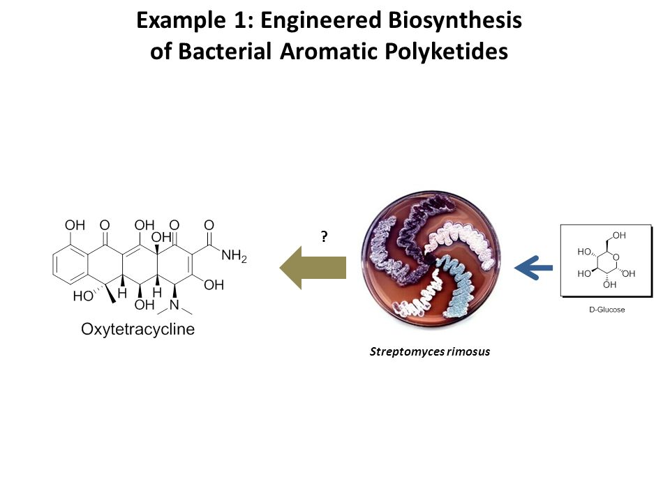 Example 1: Engineered Biosynthesis of Bacterial Aromatic Polyketides
