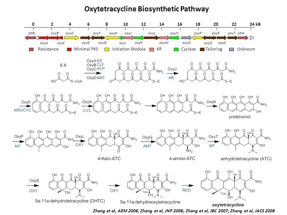 Oxytetracycline Biosynthetic Pathway