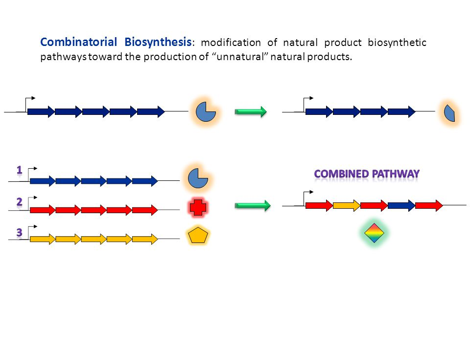 Combinatorial Biosynthesis: modification of natural product biosynthetic pathways toward the production of unnatural natural products.