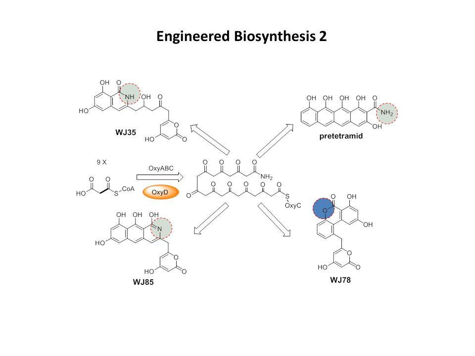 Engineered Biosynthesis 2