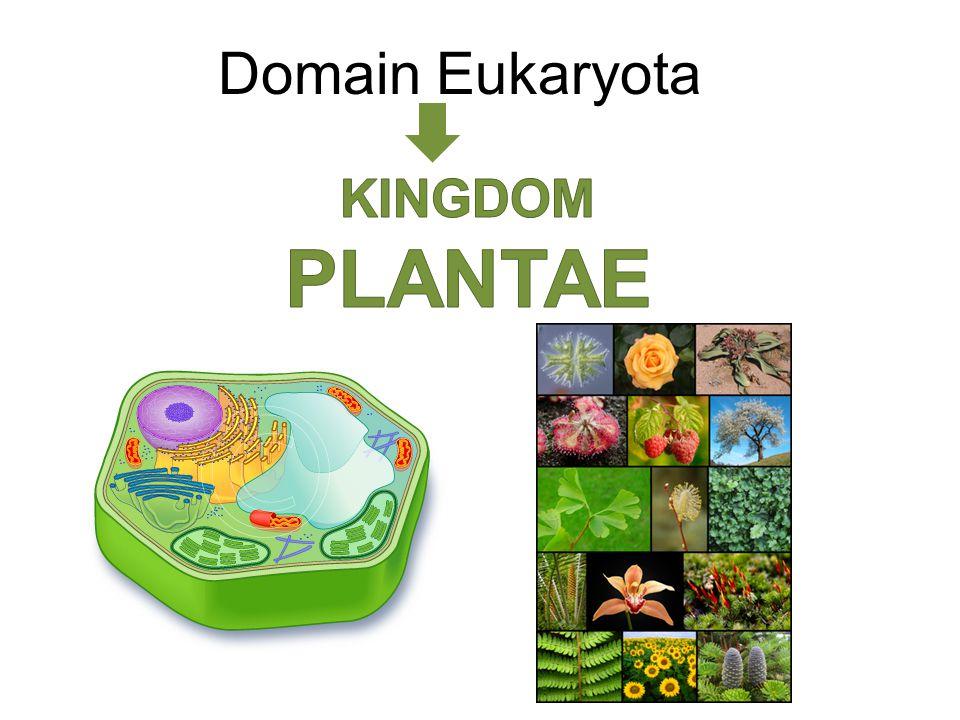 Domain Eukaryota KINGDOM PLANTAE