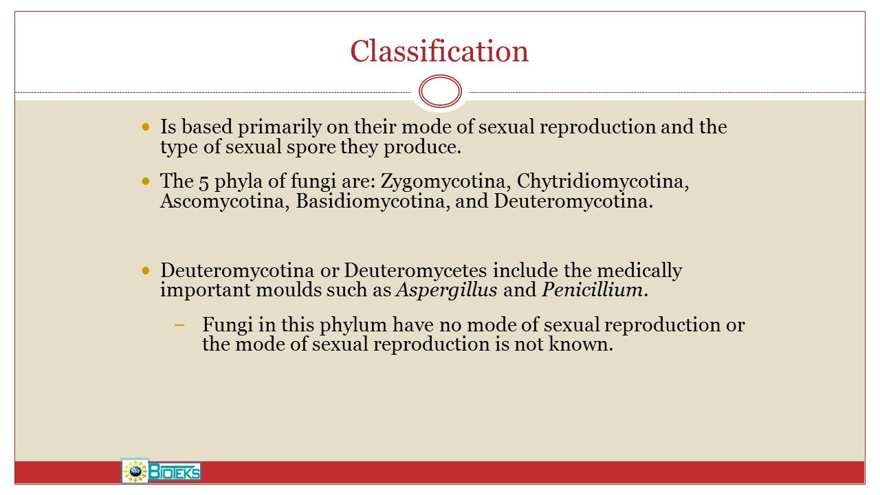 Classification Is based primarily on their mode of sexual reproduction and the type of sexual spore they produce.