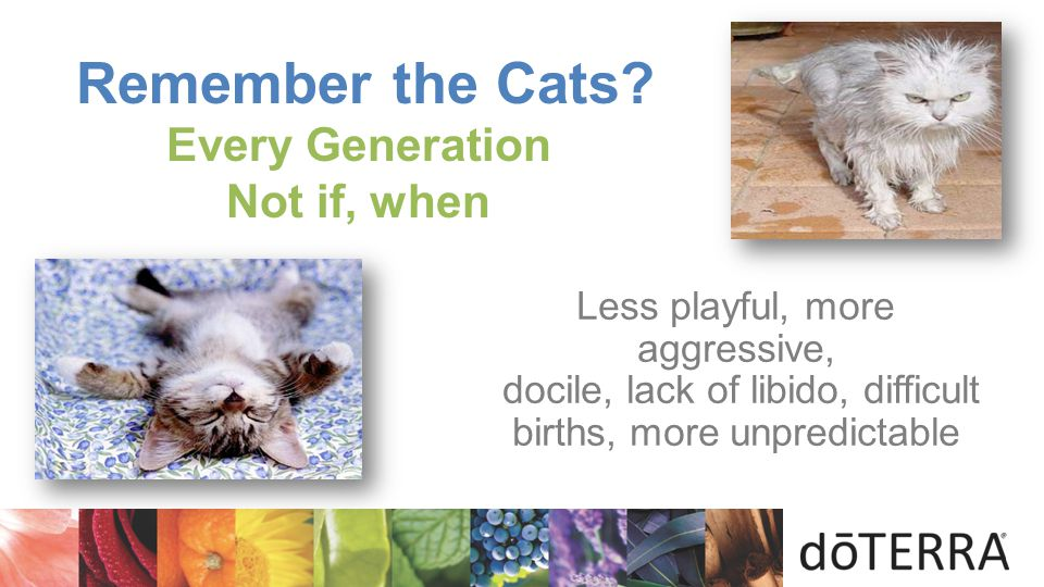 Remember the Cats Every Generation Not if, when