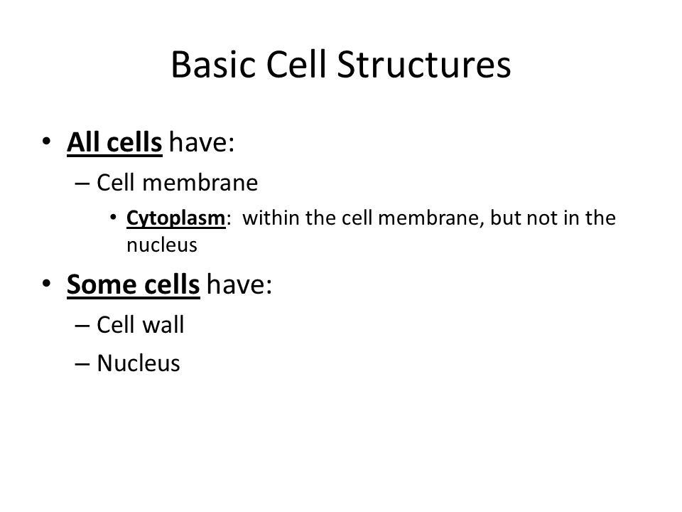 Basic Cell Structures All cells have: Some cells have: Cell membrane
