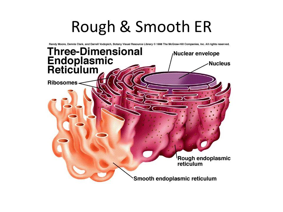 Rough & Smooth ER
