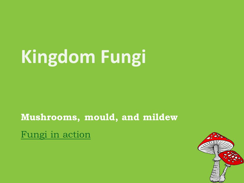 Mushrooms, mould, and mildew Fungi in action