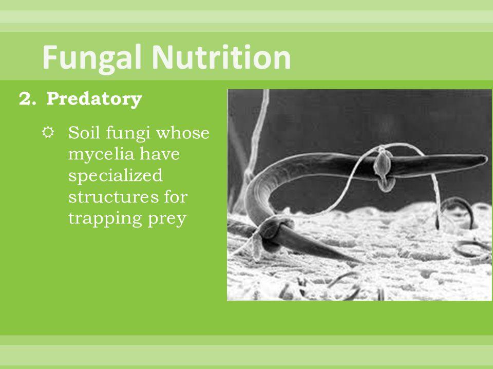 Fungal Nutrition Predatory