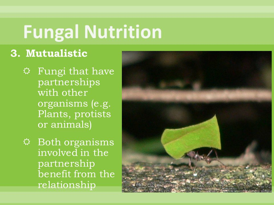 Fungal Nutrition Mutualistic