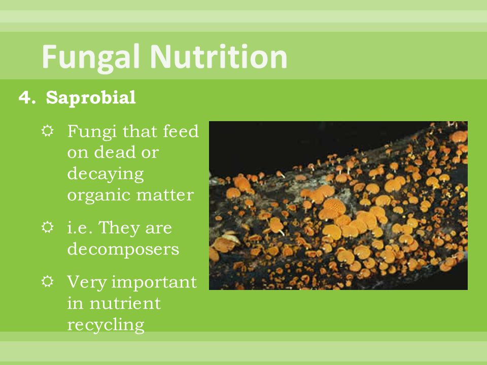 Fungal Nutrition Saprobial