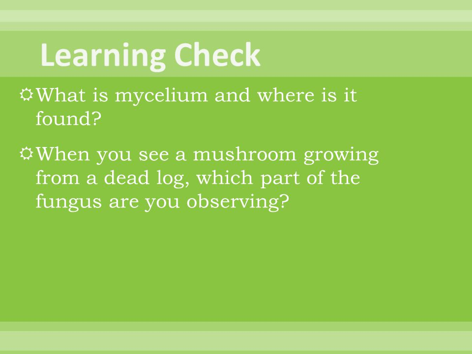 Learning Check What is mycelium and where is it found