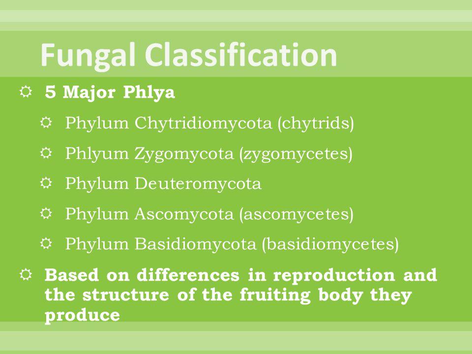 Fungal Classification
