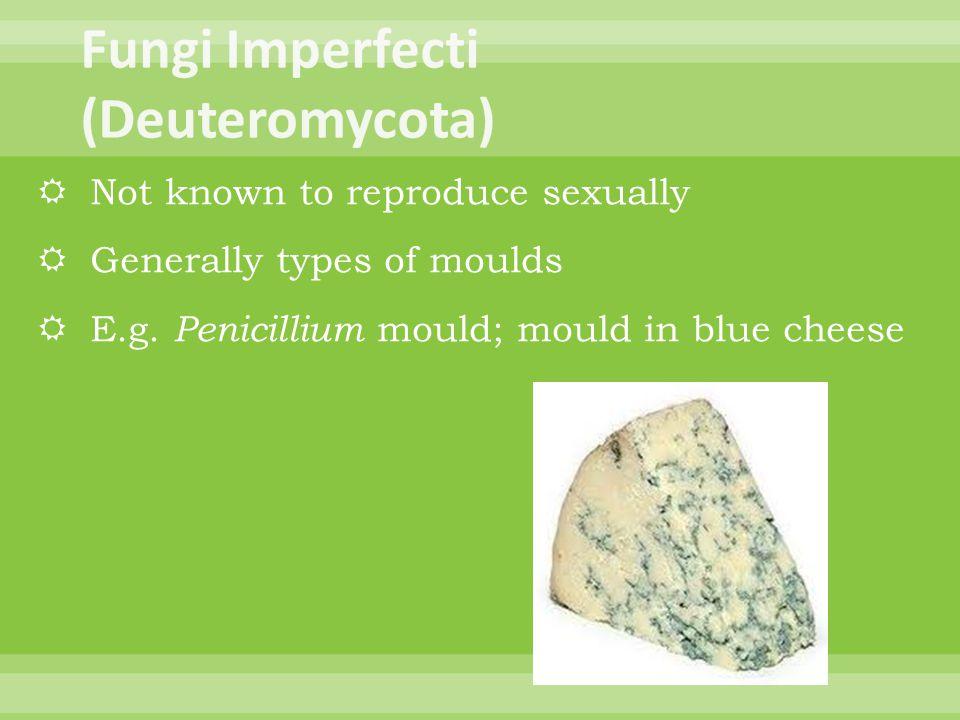 Fungi Imperfecti (Deuteromycota)