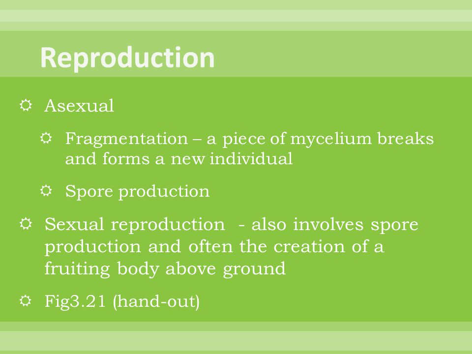 Reproduction Asexual. Fragmentation – a piece of mycelium breaks and forms a new individual. Spore production.
