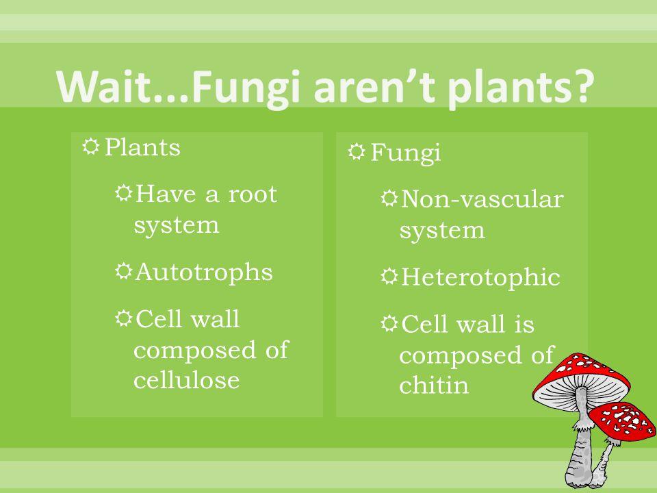 Wait...Fungi aren't plants