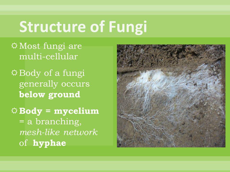 Structure of Fungi Most fungi are multi-cellular