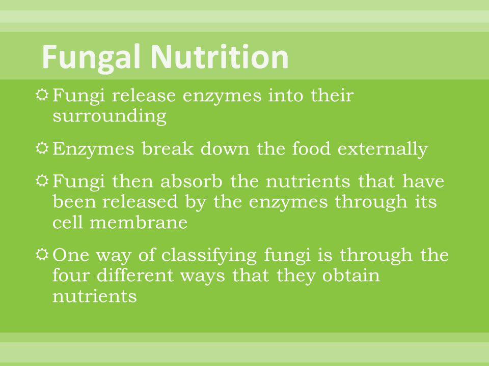 Fungal Nutrition Fungi release enzymes into their surrounding